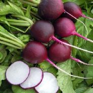 Radish Malaga Violet - 50 grams - Bulk Discounts Available